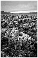 Salt formations at Devil's Golf Course. Death Valley National Park, California, USA. (black and white)
