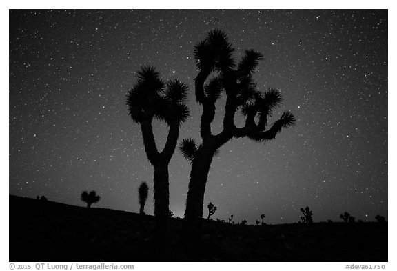 Joshua Trees and starry sky, Lee Flat. Death Valley National Park (black and white)
