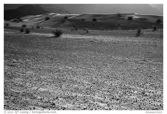 Ground littered with small rocks near Ibex Dunes. Death Valley National Park (black and white)