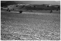 Ground littered with small rocks near Ibex Dunes. Death Valley National Park ( black and white)