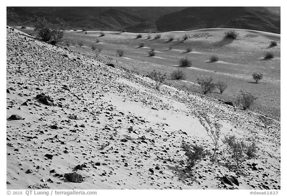 Rocks and shrubs, Ibex Dunes. Death Valley National Park (black and white)