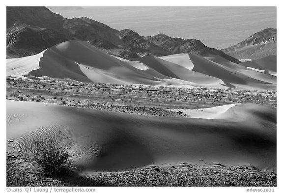 Shrubs, Ibex sand dunes, and mountains. Death Valley National Park (black and white)