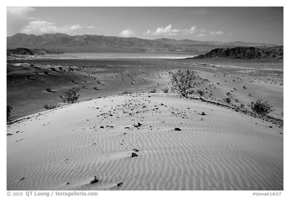 Ibex Dunes and valley. Death Valley National Park (black and white)