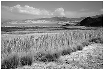 Marsh area, Saragota Spring. Death Valley National Park ( black and white)