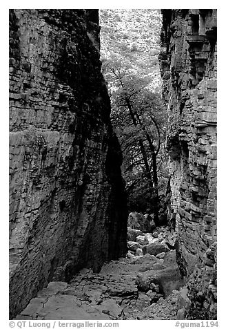 Narrow passage between cliffs, Devil's Hall. Guadalupe Mountains National Park (black and white)