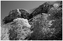 Trees in autumn foliage and cliffs,McKittrick Canyon. Guadalupe Mountains National Park, Texas, USA. (black and white)