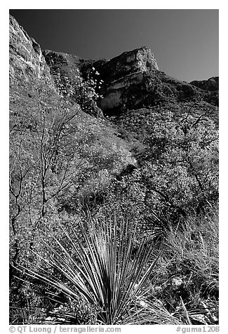 McKittrick Canyon in the fall. Guadalupe Mountains National Park (black and white)