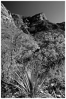 McKittrick Canyon in the fall. Guadalupe Mountains National Park, Texas, USA. (black and white)