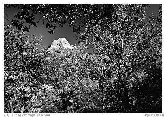 Limestone Peak framed by trees in fall colors in McKitterick Canyon. Guadalupe Mountains National Park (black and white)