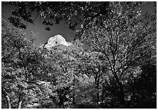 Limestone Peak framed by trees in fall colors in McKitterick Canyon. Guadalupe Mountains National Park ( black and white)