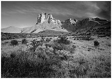 Desert vegetation and El Capitan from Guadalupe pass, morning. Guadalupe Mountains National Park ( black and white)