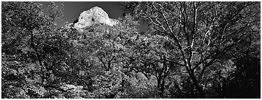 Forest in autumn color and rocky peak. Guadalupe Mountains National Park (Panoramic black and white)
