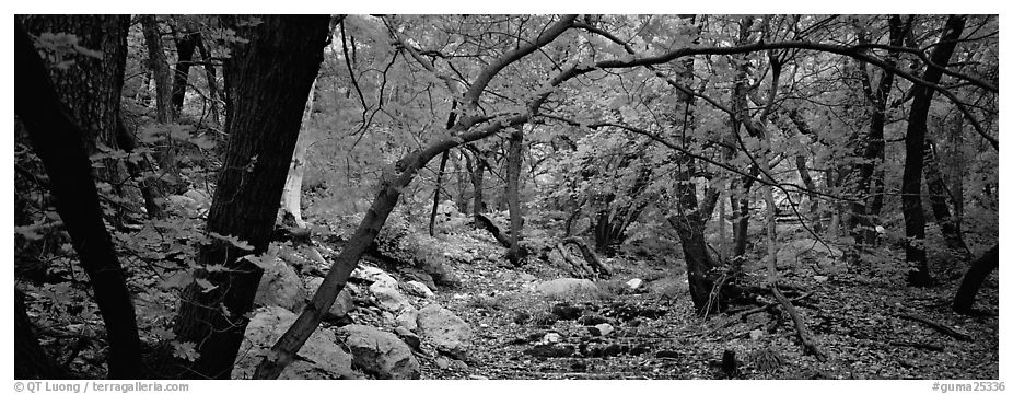 Creek in autumn. Guadalupe Mountains National Park (black and white)