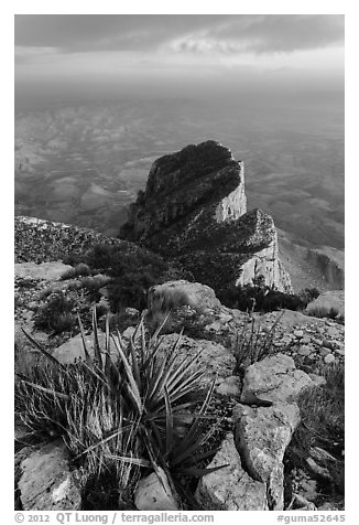 Sotol on Guadalupe Peak and El Capitan backside. Guadalupe Mountains National Park (black and white)
