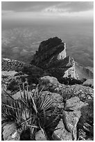 Sotol on Guadalupe Peak and El Capitan backside. Guadalupe Mountains National Park, Texas, USA. (black and white)