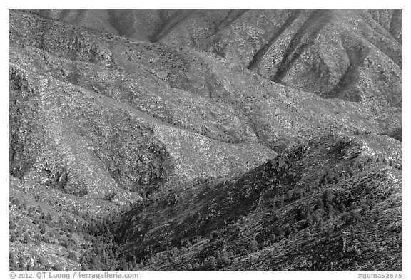 Ridges from fossil Reef. Guadalupe Mountains National Park (black and white)