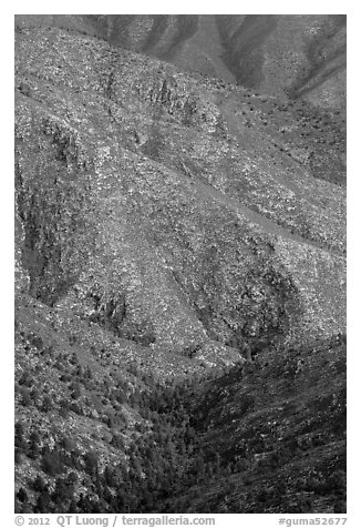 Forested ridges above Pine Spring Canyon. Guadalupe Mountains National Park (black and white)