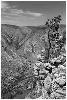 Tree growing at edge of cliff. Guadalupe Mountains National Park, Texas, USA. (black and white)