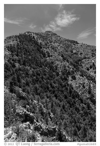 Guadalupe Peak and forested slopes. Guadalupe Mountains National Park (black and white)