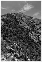 Guadalupe Peak and forested slopes. Guadalupe Mountains National Park, Texas, USA. (black and white)