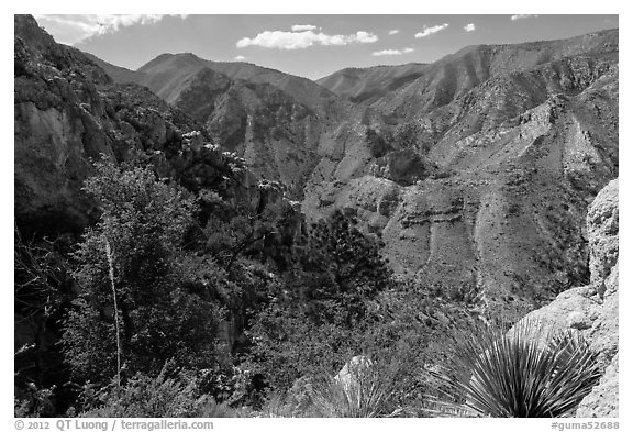 Pine Spring Canyon from above. Guadalupe Mountains National Park (black and white)