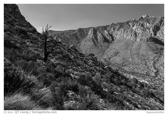 Slopes with shrubs and Hunter Peak. Guadalupe Mountains National Park (black and white)