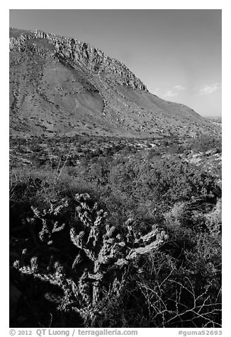 Cactus with bloom, Hunter Peak. Guadalupe Mountains National Park (black and white)