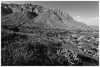 Cactus and mountains. Guadalupe Mountains National Park ( black and white)