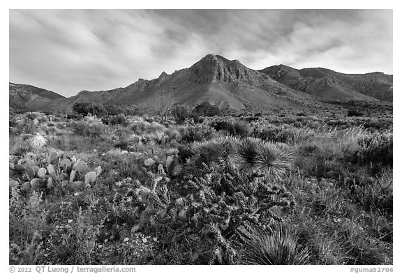 Chihuahan desert cactus and mountains. Guadalupe Mountains National Park (black and white)