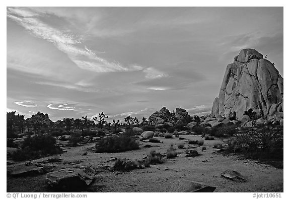 Landscape with climbers at sunset. Joshua Tree National Park (black and white)
