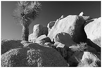 Joshua Tree and boulders. Joshua Tree National Park, California, USA. (black and white)