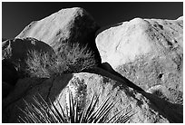 Yucca and boulders. Joshua Tree National Park, California, USA. (black and white)