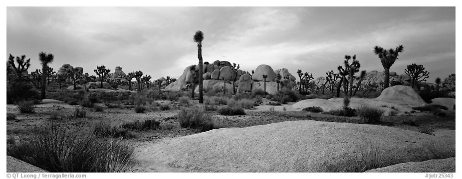 Granite slabs and boulders with Joshua Trees. Joshua Tree National Park (black and white)