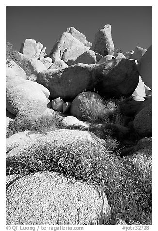 Wildflowers and rockpiles. Joshua Tree National Park (black and white)