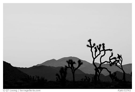 Joshua trees and mountains, sunset. Joshua Tree National Park (black and white)