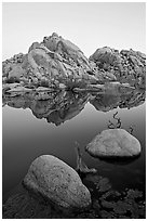 Rockpiles and reflections, Barker Dam, dawn. Joshua Tree National Park, California, USA. (black and white)