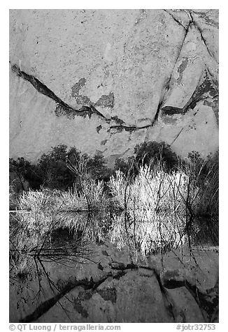 Rock wall, willows, and reflections, Barker Dam, early morning. Joshua Tree National Park (black and white)