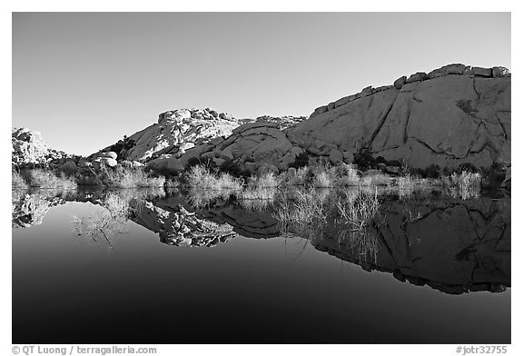 Rocks, willows, and Reflections, Barker Dam, morning. Joshua Tree National Park (black and white)