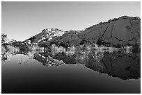 Rocks, willows, and Reflections, Barker Dam, morning. Joshua Tree National Park, California, USA. (black and white)