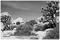 Campers, Hidden Valley Campground. Joshua Tree National Park ( black and white)