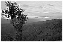 Yucca at sunset, Keys View. Joshua Tree National Park, California, USA. (black and white)