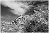 Palo Verde in bloom, rock pile, and cloud. Joshua Tree National Park, California, USA. (black and white)