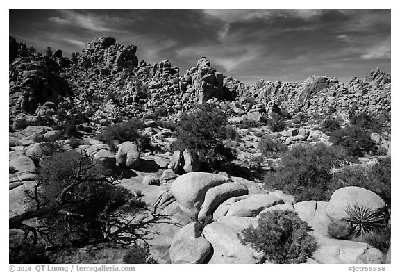 Hidden Valley. Joshua Tree National Park (black and white)