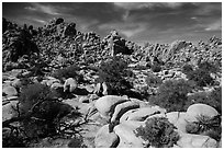 Hidden Valley. Joshua Tree National Park ( black and white)