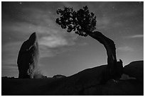 Juniper and balanced pointed rock at night. Joshua Tree National Park ( black and white)