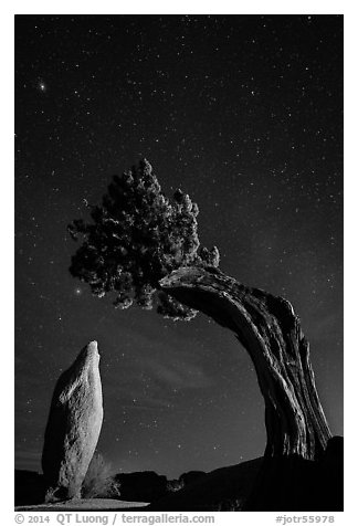 Pointed monolith framed by juniper tree at night. Joshua Tree National Park (black and white)