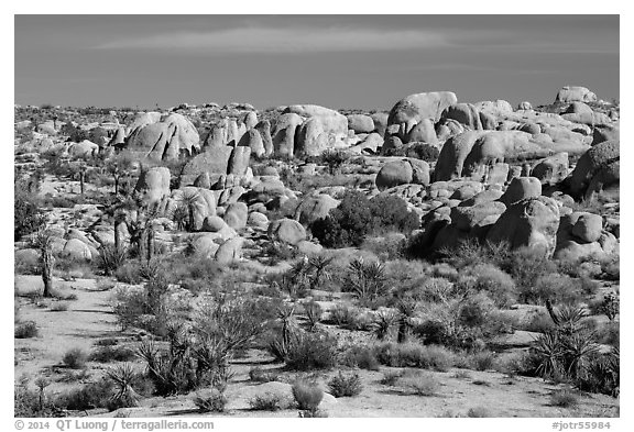 Boulders around White Tank. Joshua Tree National Park (black and white)