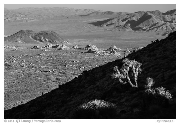 Cactus, slope in shade, and desert mountains. Joshua Tree National Park (black and white)