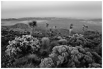 View from Ryan Mountain with earth shadow at dusk. Joshua Tree National Park ( black and white)