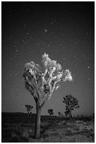 Joshua trees under clear sky with stars. Joshua Tree National Park ( black and white)